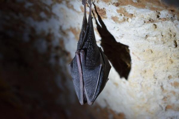 [크기변환]박쥐.jpg